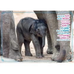 """Tierposter """"Elefantenbaby"""""""