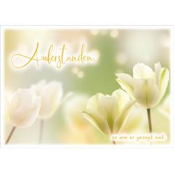 Faltkarte zu Ostern - Tulpen