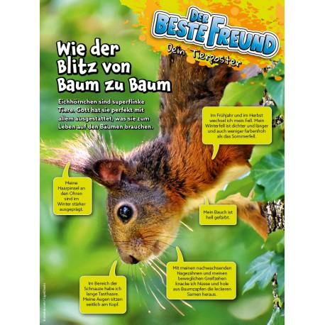 """Tierposter """"Eichhörnchen"""""""